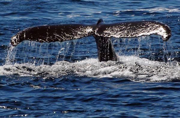 8352d7f024c57294-wwhale